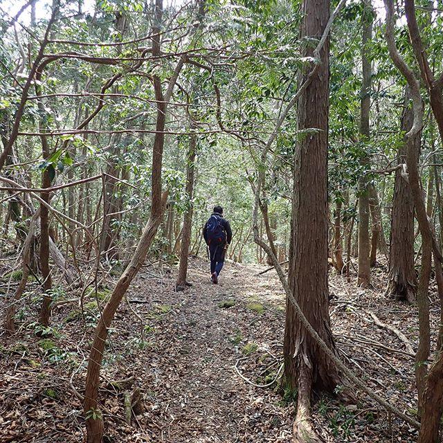 樹海の古道