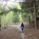 秘密の林道